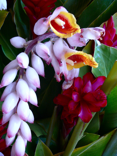 Ginger-orchid