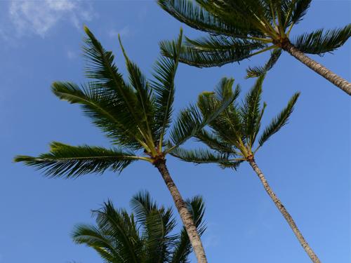 Palm-2