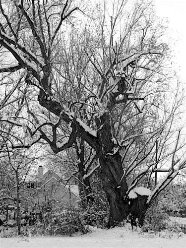 Tree-far