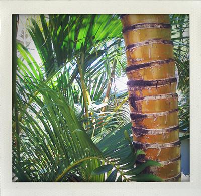 Tree-rings-1