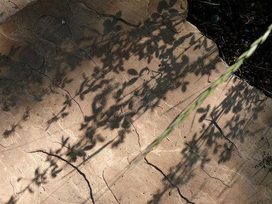 Grassshadow